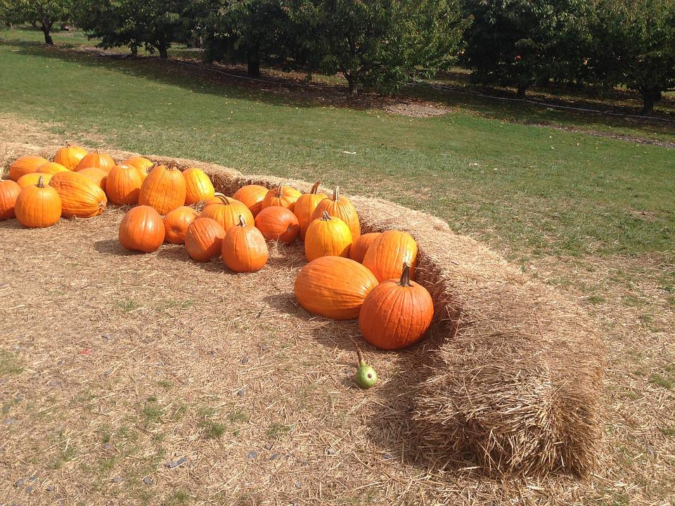 Pumpkin, Autumn, Hay, Pumpkin Patch, Halloween
