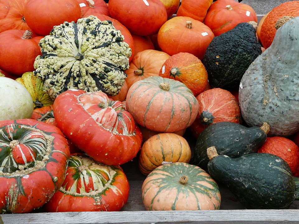Pumpkins, Kuebismarkt, Pumpkin Species, Different