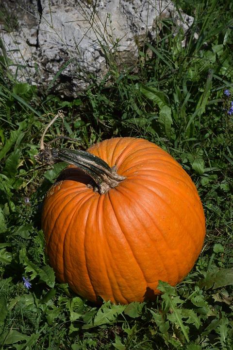 Pumpkin, Summer, Autumn, Nature, Garden, Agriculture