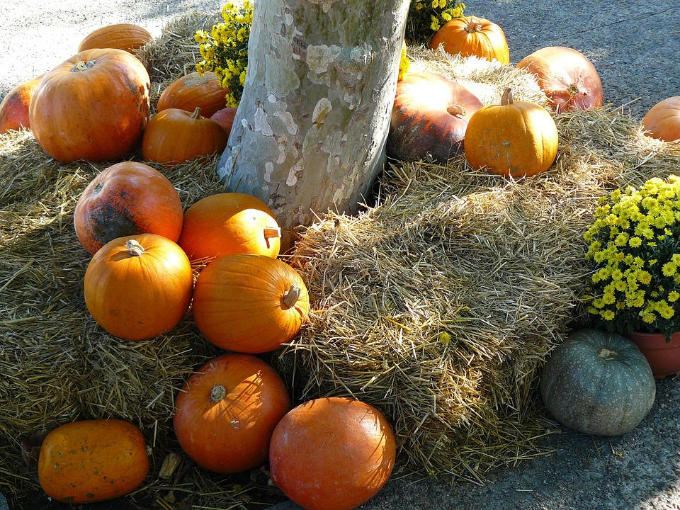 Pumpkin, Thanksgiving, Orange, Autumn, Large, Colorful