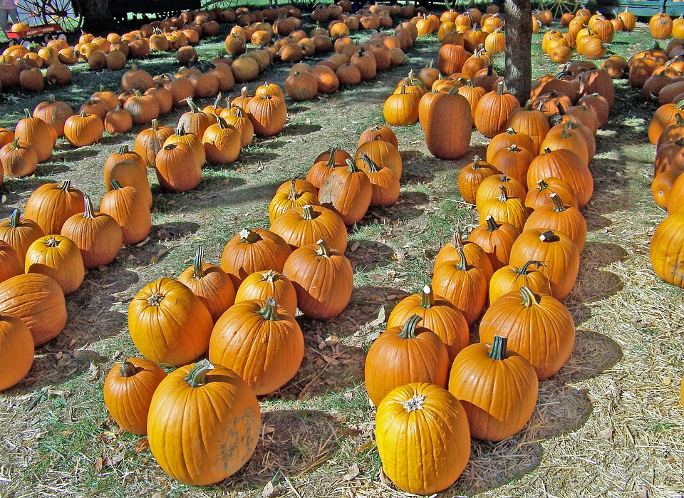 Pumpkins, Autumn, Halloween, Fall, Celebration