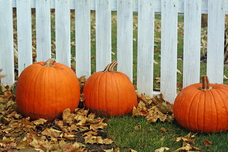 Pumpkins, Fence, Thanksgiving, Halloween, Decoration