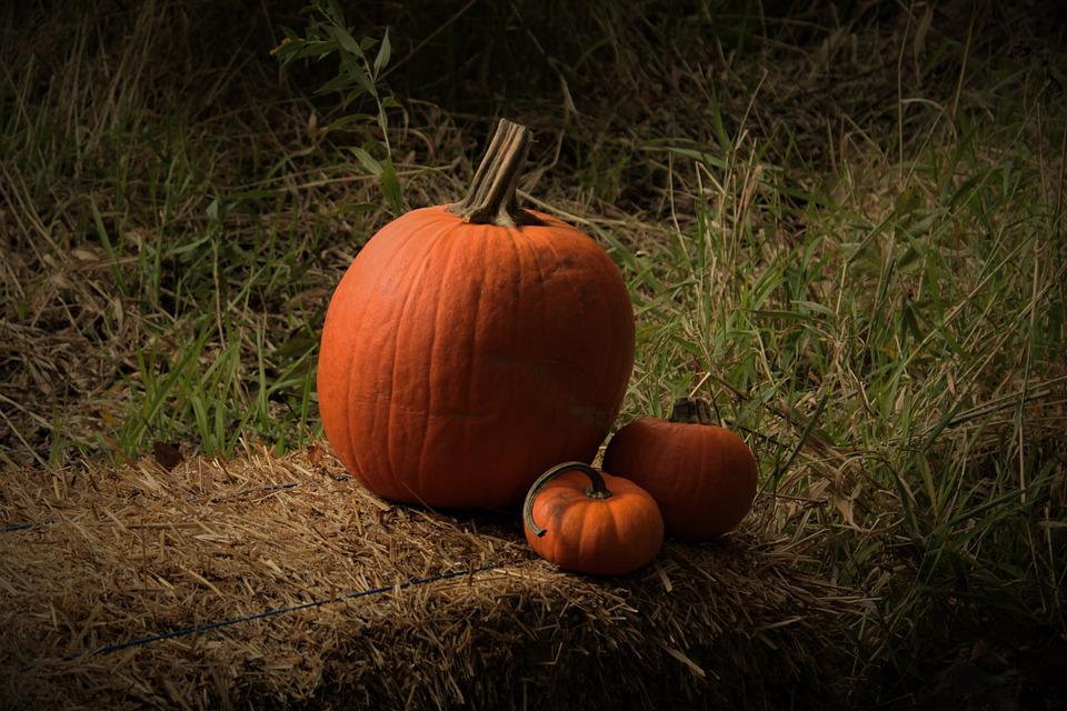 Pumpkins, Fall, Autumn, Halloween, October, Orange