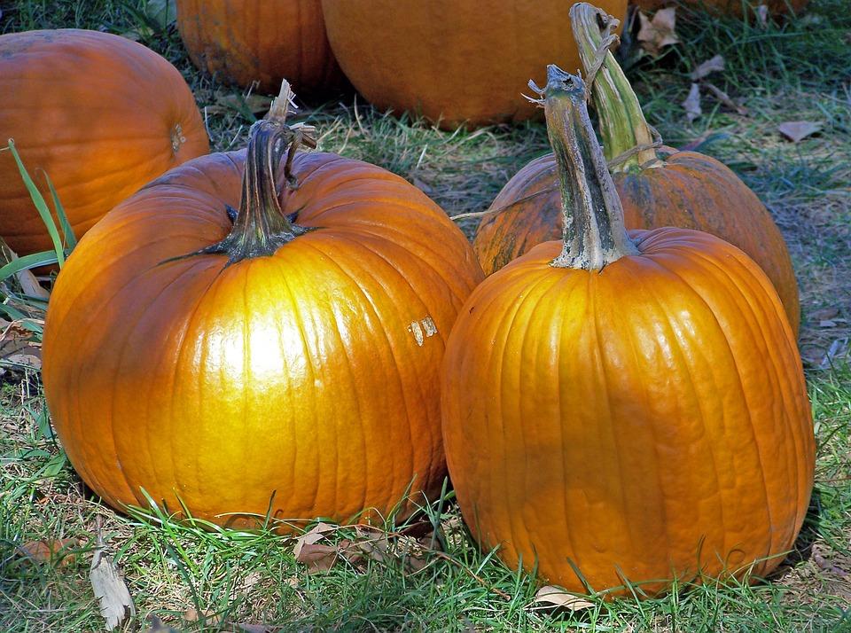 Pumpkins, Autumn, Fall, Halloween, Celebration, Orange