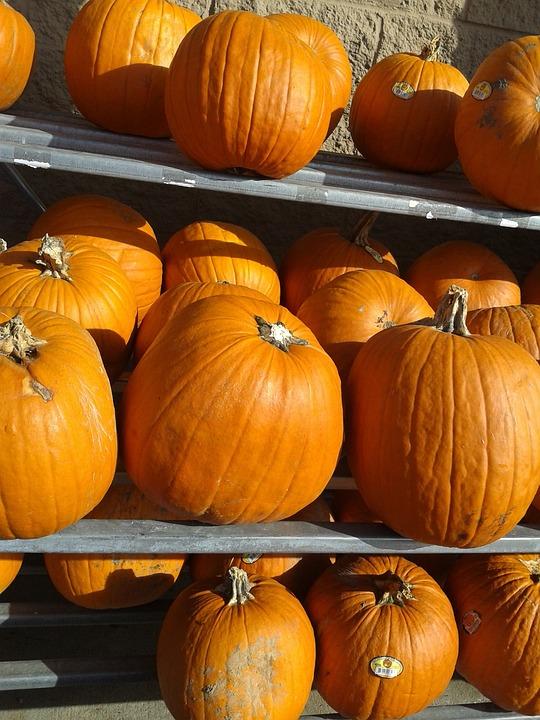 Pumpkins, Fall, Harvest, Autumn, Orange