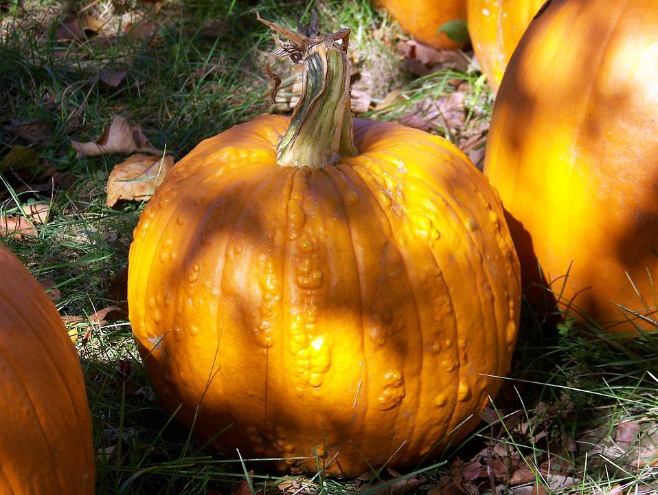 Pumpkin, Autumn, Fall, Halloween, Pumpkins, Harvest