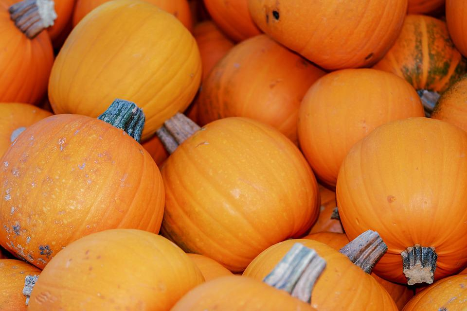 Squashes, Cucurbita Pepo, Pumpkins, Food, Vegetables