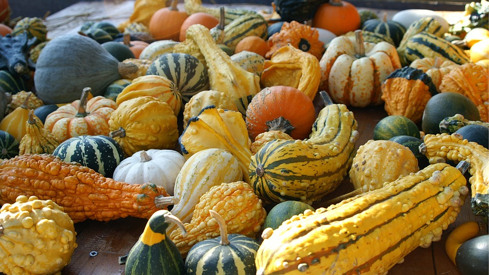 Pumpkins, Yellow, Orange, Green
