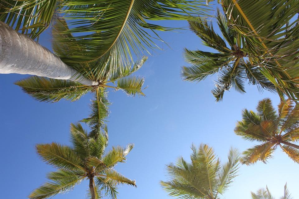 Palms, Punta Cana, Tropical, Dominican Republic, Tropic