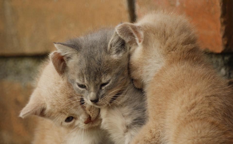 Animals, Cats, Domestic, Pets, Puppies