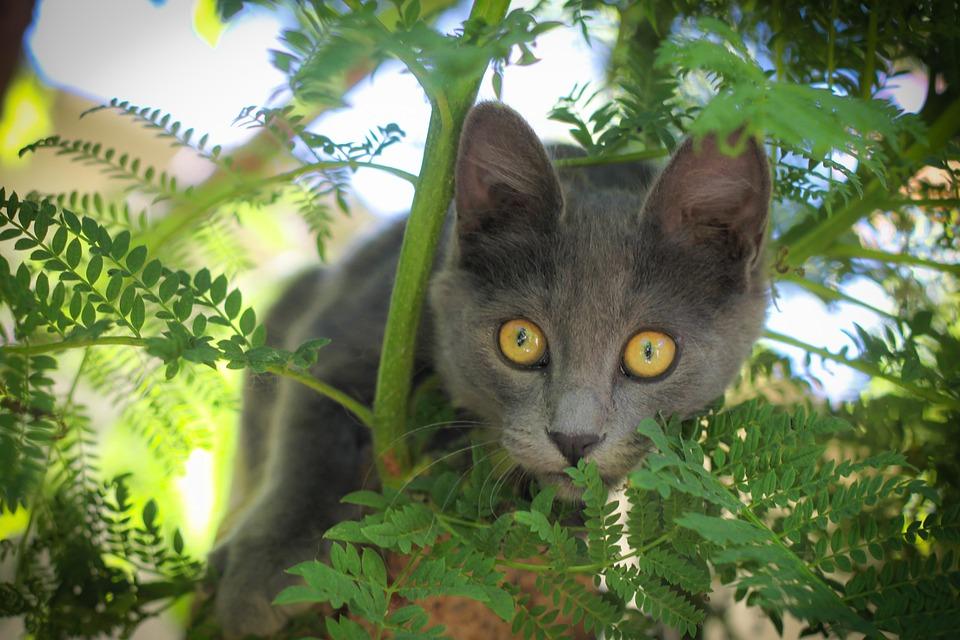 Cat, Pet, Animal, Animals, Look, Puppy, Cats, Pets