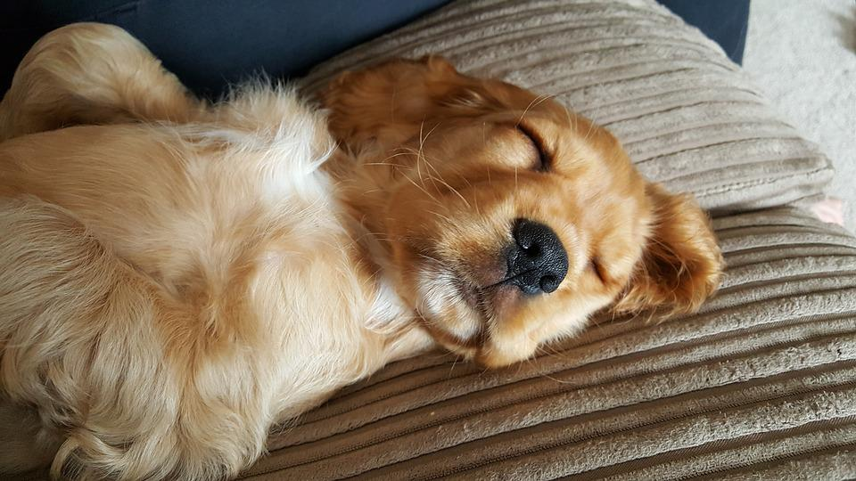 <b>Golden</b> Retrievers <-3: a collection of Animals and pets ideas to ...