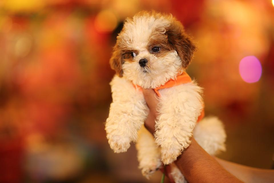 Free Photo Puppy Dog And Cat Studio Dog Animal Cute Pet Max Pixel