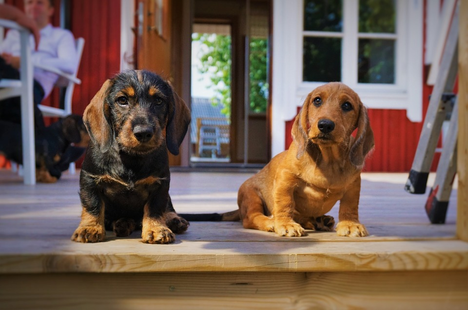 Puppy, Dog, Brown, Love, Sweet, Animals, Pets