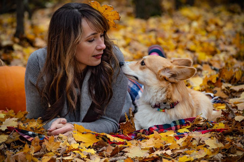 Welsh Corgi Pembroke, Corgi, Dog, Puppy, Pet, Animal