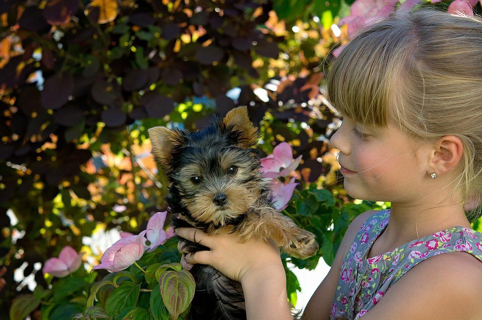 Child, Girl, Blond, Dog, Puppy, Small Dog, Young Dog