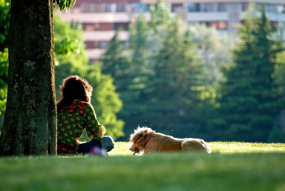 Dog, Walking, Sunset, Girl, Sunrise, Puppy, Grass
