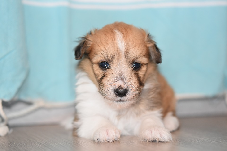 Puppy, Puppy Female, Pup, Doggie, Portrait Puppy, Bitch