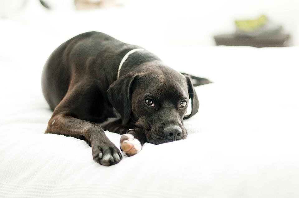 Dog, Canine, Domestic, Black, Puppy, Pet, Cute, Animal