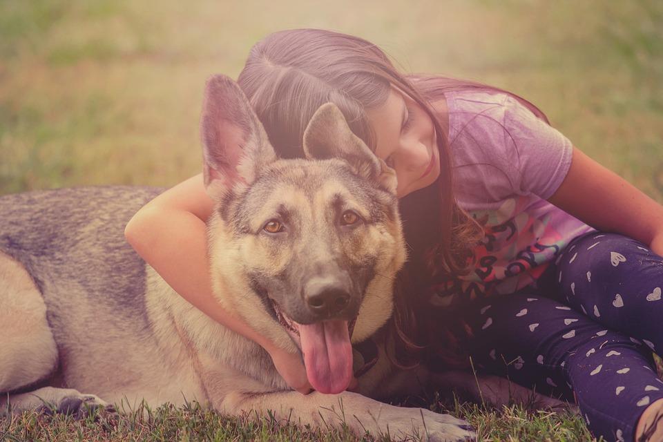 Dog, Child, German Shepherd, Love, Animal, Pet, Puppy