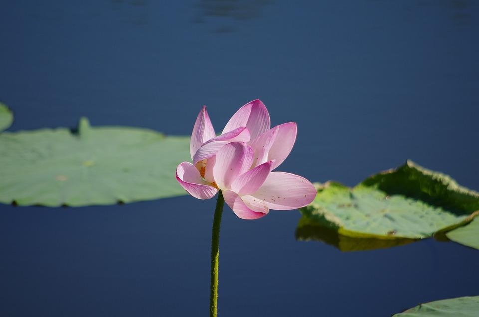 Lotus, Pure, Be Quiet
