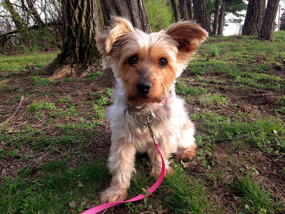 Dog, Portrait, Cute, Animal, Breed, Pet, Purebred