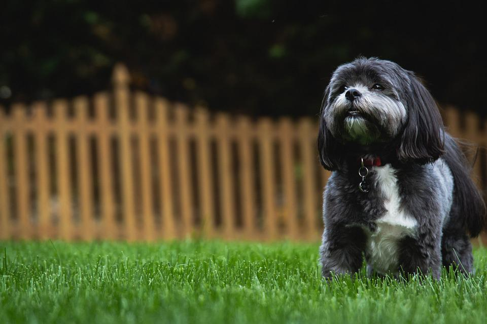 Dog, Backyard, Canine, Pet, Animal, Puppy, Purebred