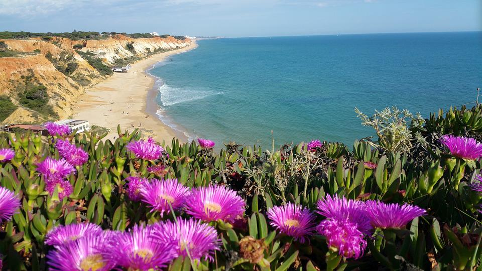 Portugal Algarve Purple Flowers Beach Ocean