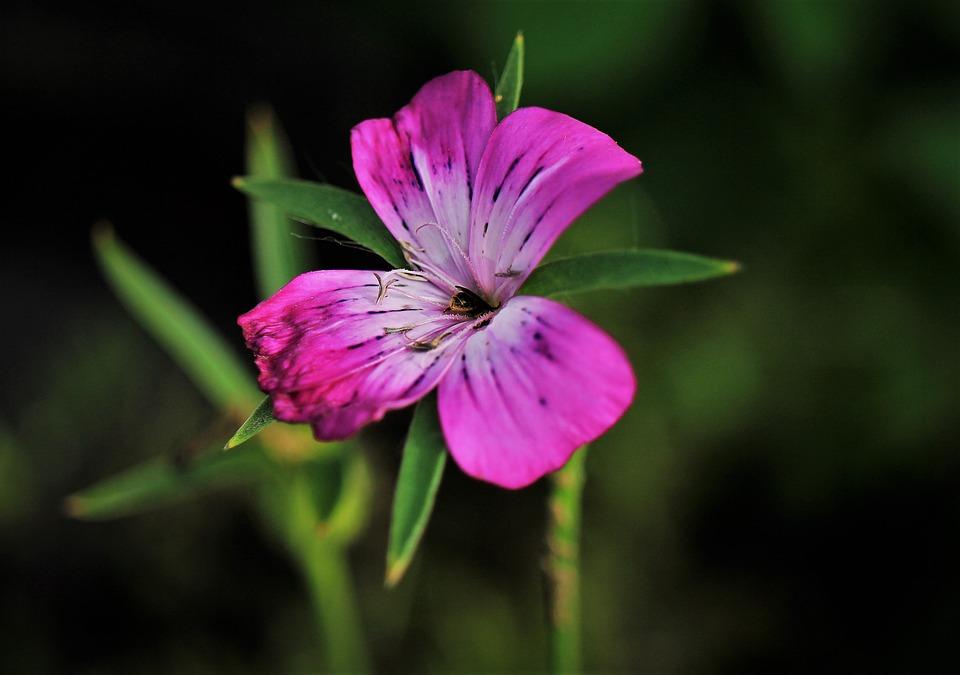 Blossom, Bloom, Flower, Plant, Pink, White, Purple