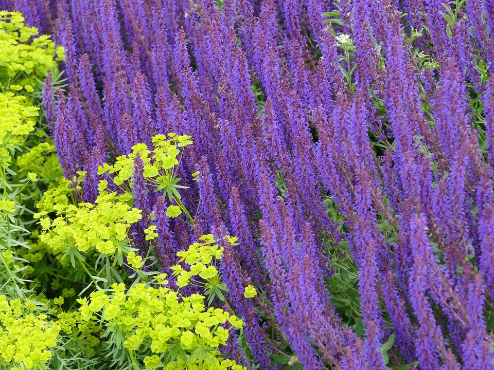 Garden, Flowers, Purple, Yellow, Summer, Bloom, Plant