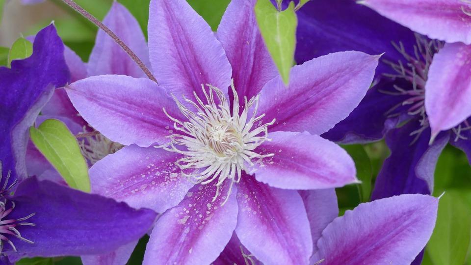 Flowers, Purple, Lavender, Nature, Bloom, Garden, Plant