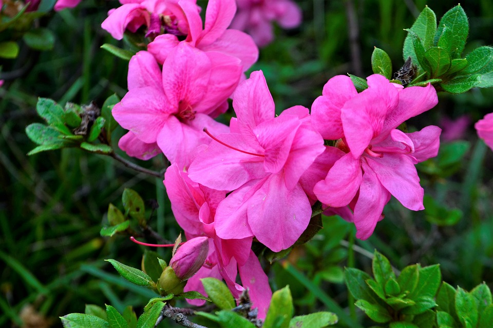 Beautiful Flower, Lavender, Purple, Blossom, Nature