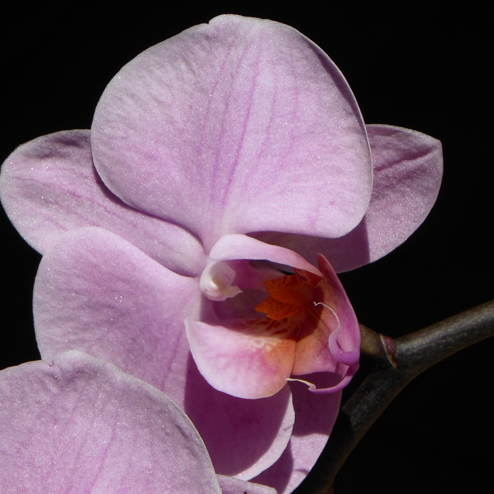 Orchid, Blossom, Bloom, Flower, Purple, Plant