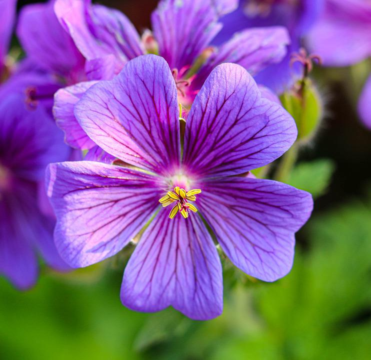 Flowers, Purple, Flower, Nature, Plant, Color, Spring
