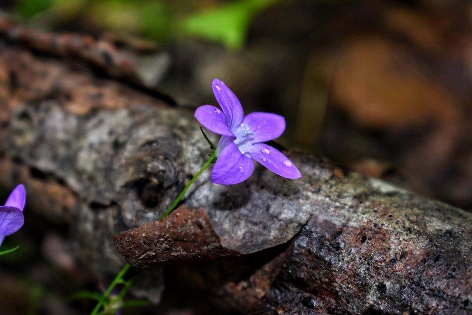 Peace, Blue, Nature, Forest, Purple, Flower, Rain