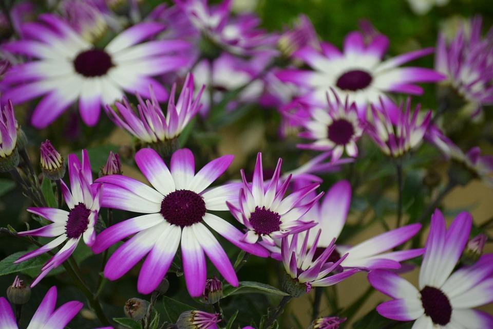 Fantastic Purple Flower Bouquets Sketch - Ball Gown Wedding Dresses ...