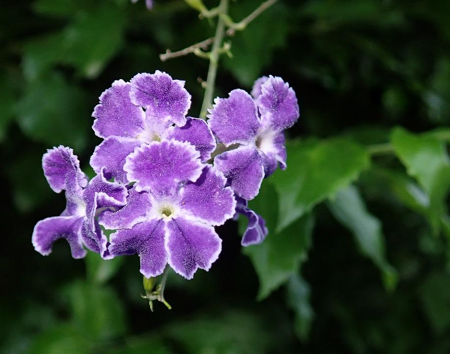 Flower, Purple, Shrub, Garden, Nature
