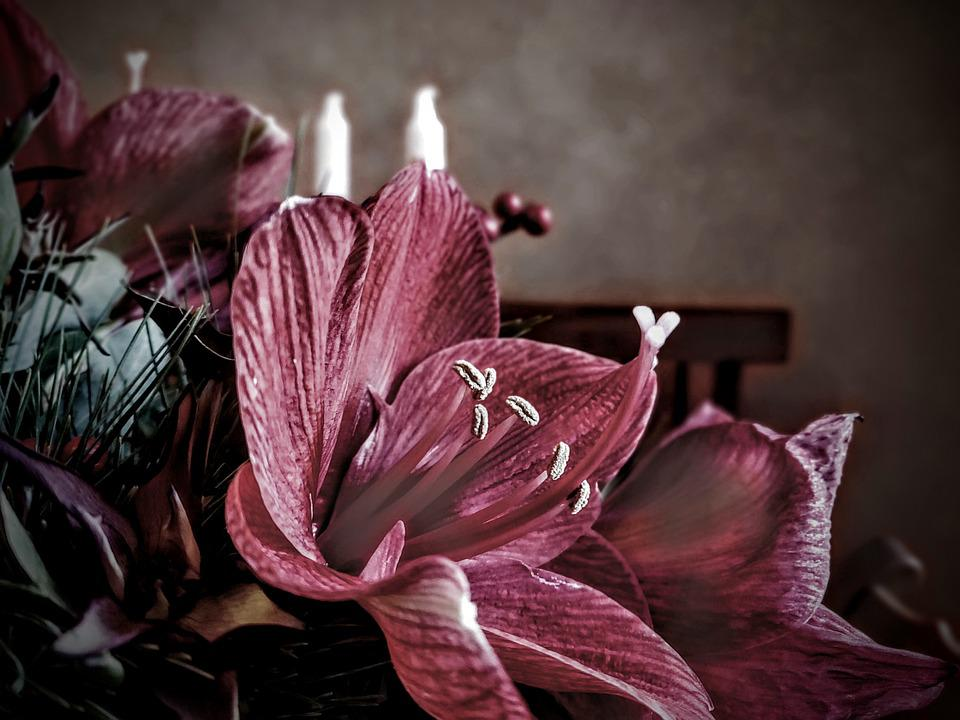 Flower, Red, Purple, Petals, Living Room, Table, Bank