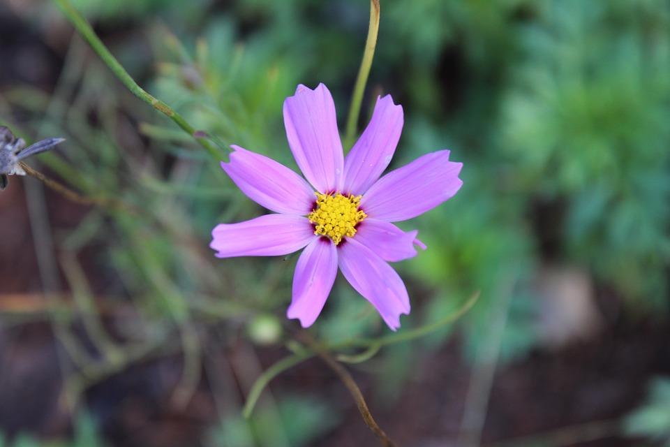 Flower, Small Flower, Purple Flower
