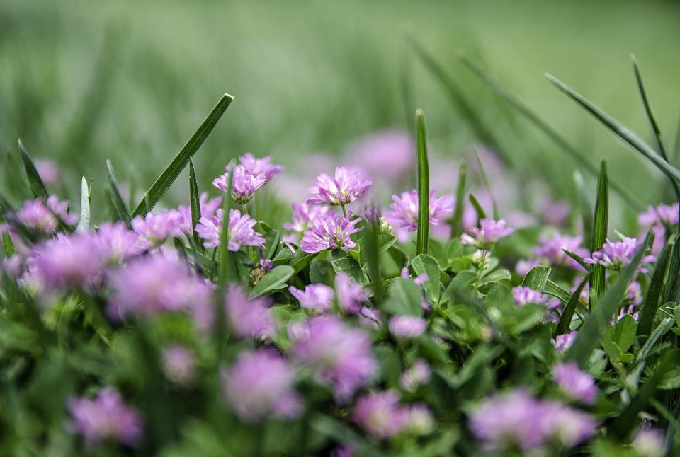 Free photo purple flower spring flowers flowers nature lila max pixel flower nature purple lila flowers spring flowers mightylinksfo