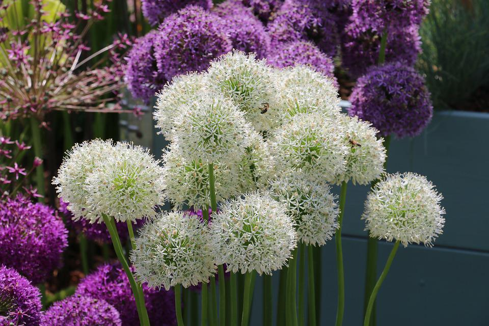 Flower, White Flower, Purple Flower