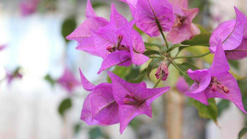 Purple, Flower, Purple Flowers