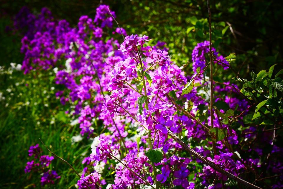 Purple, Nature, Leaves, Flower, Flowers, Blossom, Love