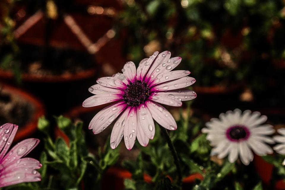 Nature, Purple Flowers, Wallpaper, Bloom, Purple, Plant