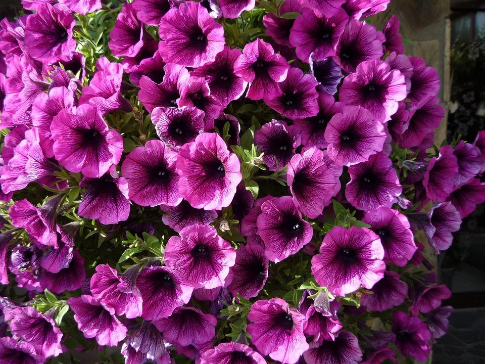 Flowers, Violet, Nature, Purple, Floral, Summer, Garden