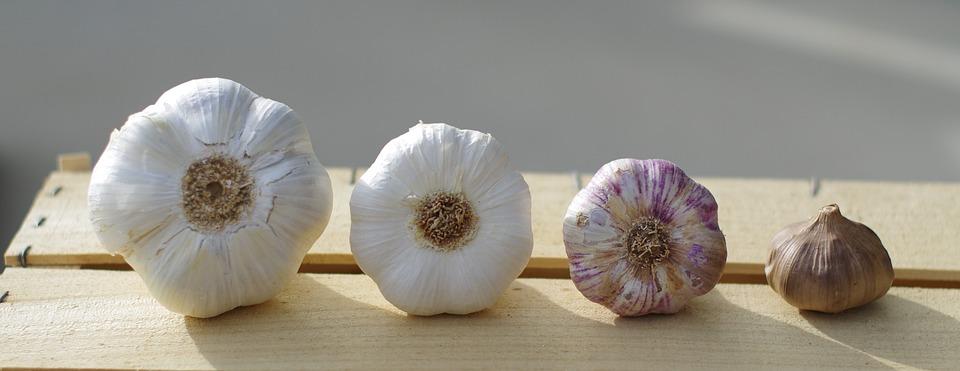 Garlic, Garlic Elephant, Garlic White, Purple Garlic