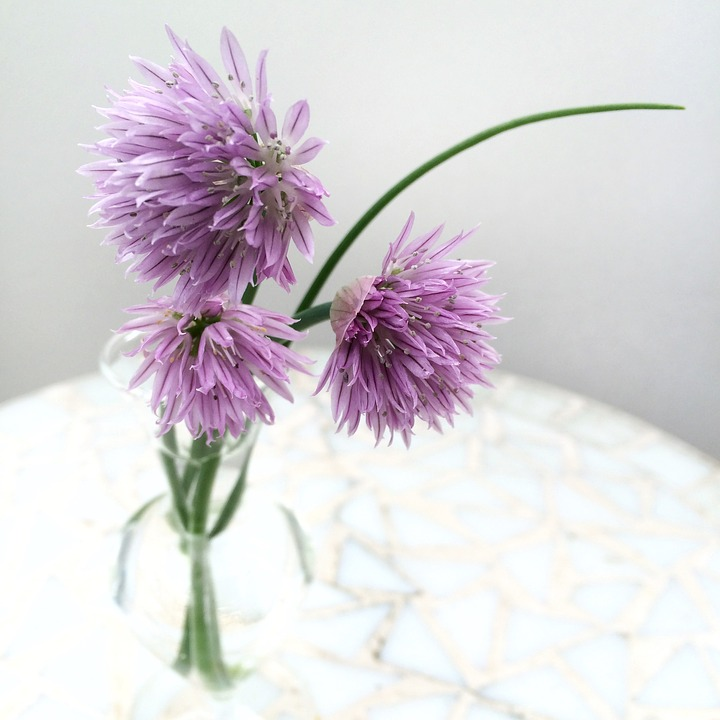 Chives, Flower, Flowers, Plant, Purple, Garden, Lökväxt