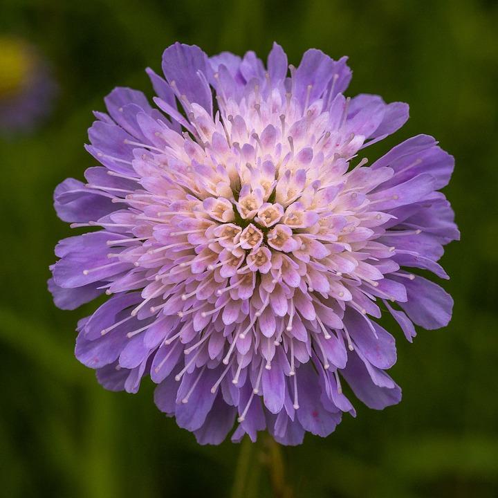 Flower, Purple, Macro, Blossom, Bloom, Nature, Close