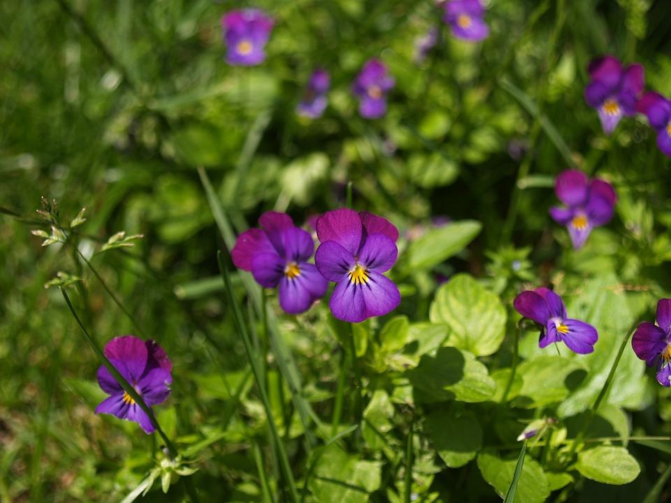 Flowers, Purple, Macro, Flower, Purple Flowers