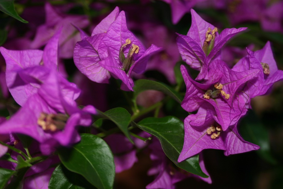 Blossom, Bloom, Flowers, Purple, Nature, Plant